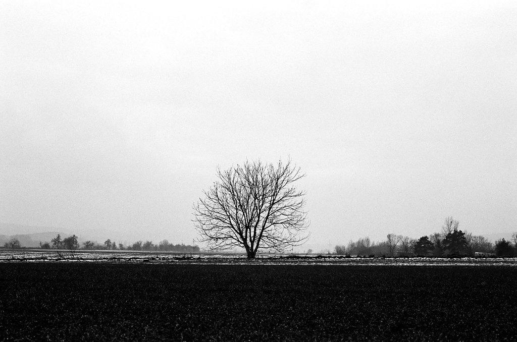 arbre-hiroshima-W-59000019-2-rd1350.jpg