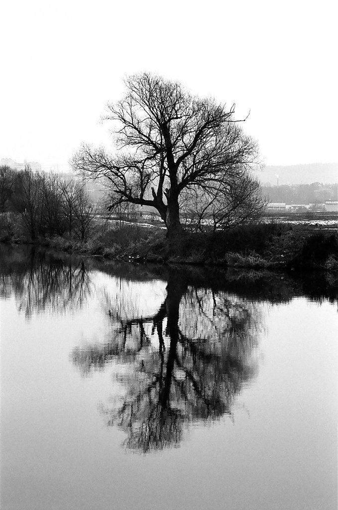 reflet-arbre-vltava-V-W-ATTENTION-CIEL-AU-TIRAGE-58990010-2-rd900.jpg