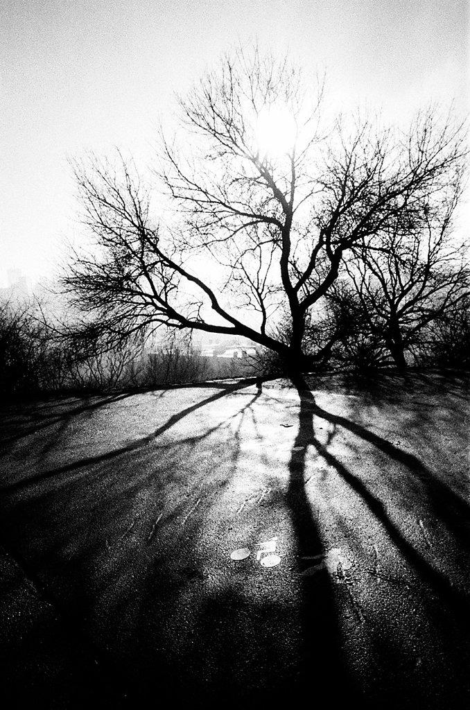 arbre-pont-V-best-85570028-2-rd900.jpg