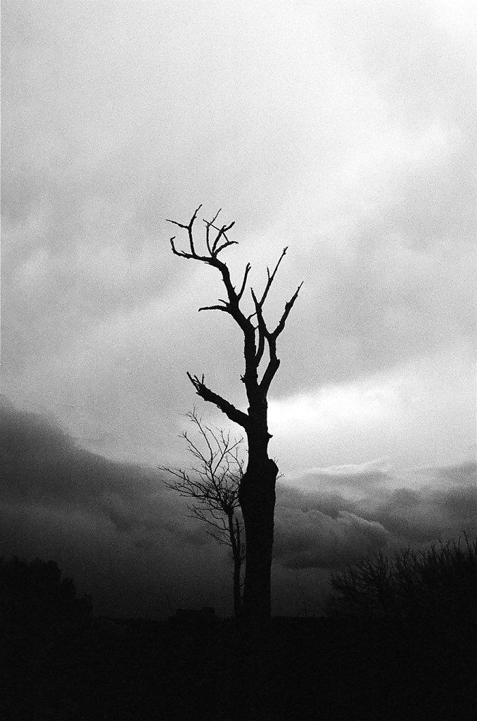 arbre-brule-summar-gineste-85220013-2-rd900.jpg